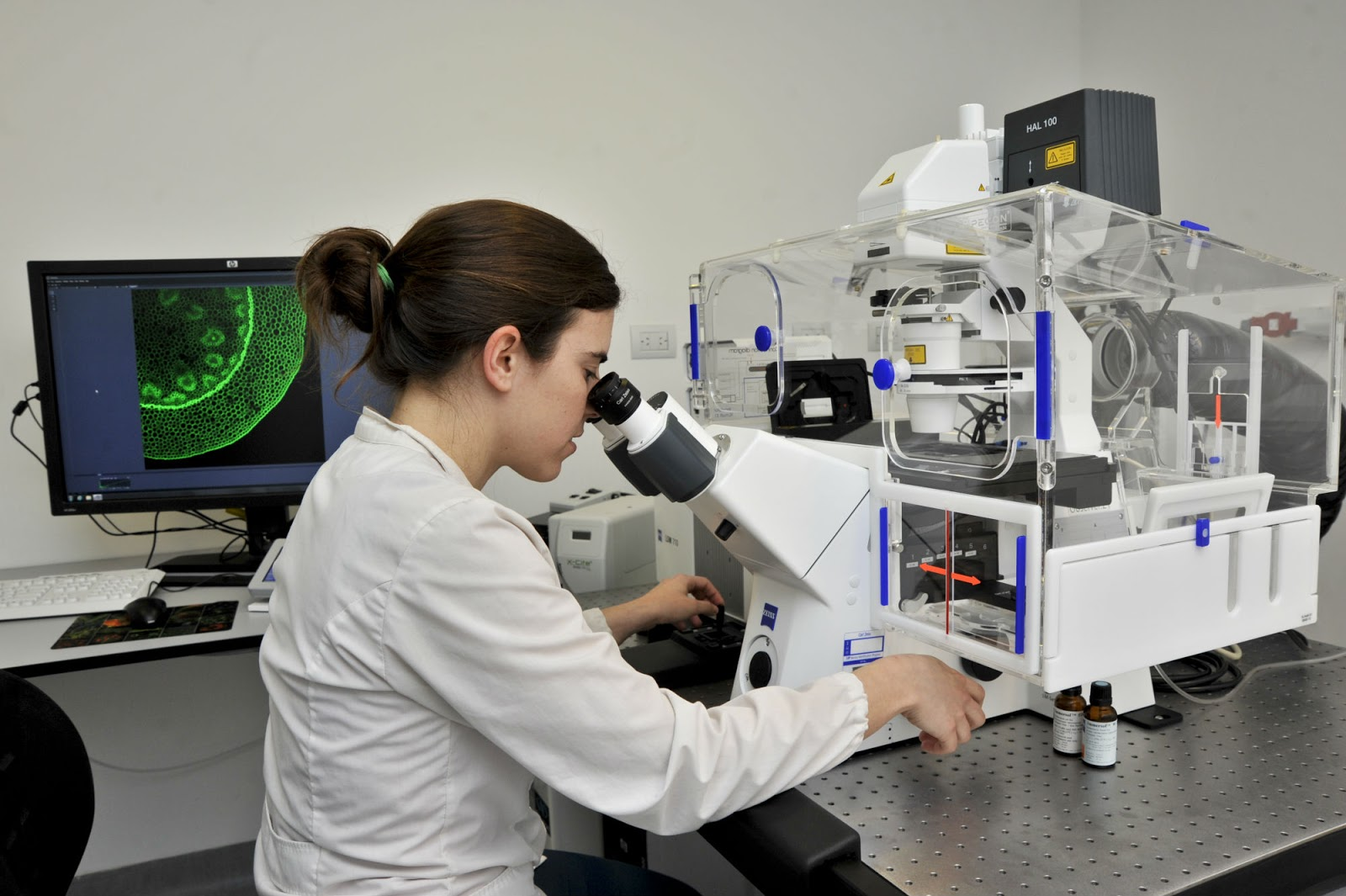 Demuestran tratamiento de neuronas con dendrímeros previene acumulación α-sinucleína