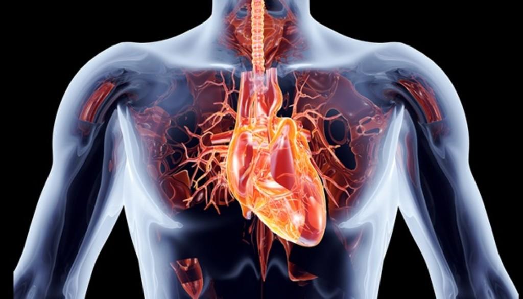 Mayor efectividad en el tratamiento de las arritmias con energía de radiofrecuencia y cateterismo