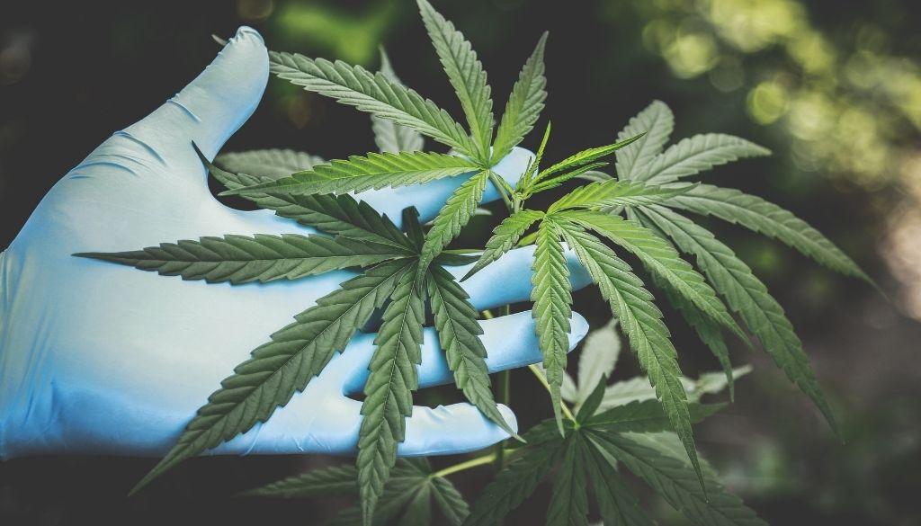 Fumar cannabis deteriora la visión y gran parte de los consumidores no son conscientes
