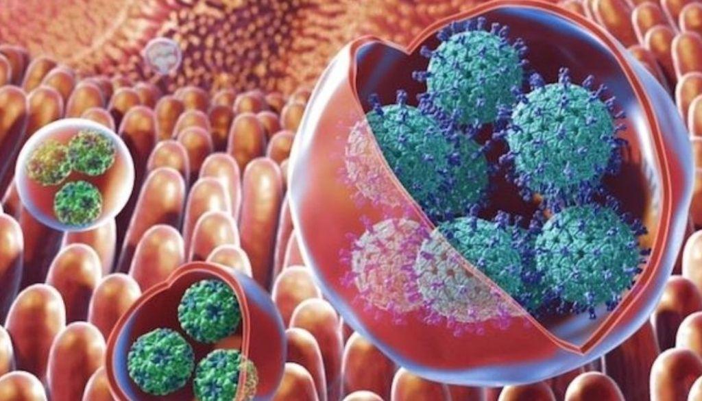 ¿Qué es el contagioso virus del vómito que preocupa a Inglaterra?