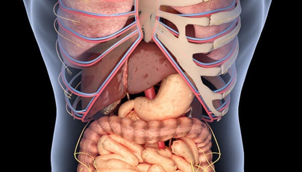 Descubren rol fundamental del colesterol en desarrollo del carcinoma hepatocelular